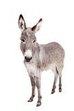 Donkey On White