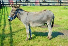 Donkey in paddock stock photography