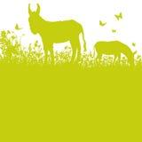 Donkey on pasture Royalty Free Stock Photography