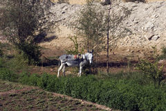 Donkey in the pasture. Stock Images