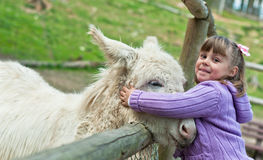 Donkey pat. A 5 year old girl pets a donkey outside at the farm Stock Images
