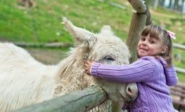 Donkey pat Stock Images