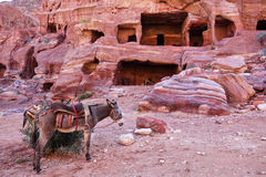 Donkey in Petra, Jordan. Donkey in front of caves carved into colourful stone in Petra, Jordan Stock Images