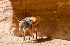 Donkey in Petra Royalty Free Stock Photos