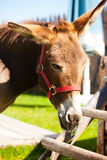 Donkey. Picture of a donkey standing Stock Photo