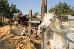 Donkey and pony on a farm on Cyprus Royalty Free Stock Photo
