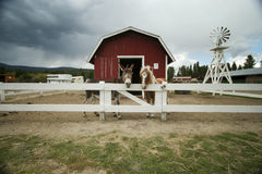 Donkey and pony in love on a r. A mule and miniature horse standing next to each other on a ranch looking the viewer as though they are best friends. A storm stock image