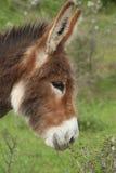Donkey Portrait Stock Photos