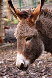 Donkey Royalty Free Stock Image