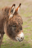 Donkey portrait Stock Photo