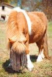 Donkey. Portrait of a pregnant donkey Royalty Free Stock Photo