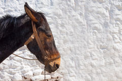 Portrait of a Greek donkey Stock Photos