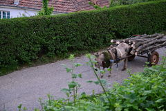 Donkey pulling a carriage loaded with firewood Royalty Free Stock Photo