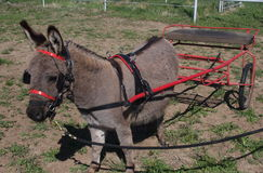 Donkey Pulling Cart Royalty Free Stock Photos