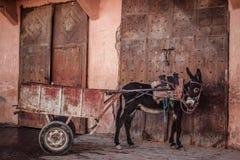 Donkey pulling cart Royalty Free Stock Images