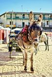 Donkey pulling a tourist car royalty free stock photo