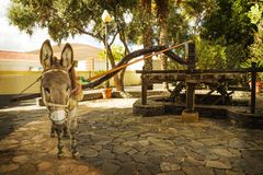 Donkey pulling a waterwheel Royalty Free Stock Image