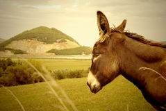 Donkey and quarry, nature reserve Santo�a Stock Images
