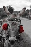 Donkey with red tassels Stock Images
