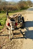 Donkey with red tassels Stock Photo