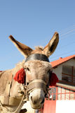 Donkey with red tassels Royalty Free Stock Image