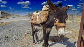 Donkey. A donkey resting near road Royalty Free Stock Photography