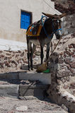 A donkey resting in stairs Stock Photos