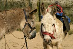 Donkey Ride Royalty Free Stock Images