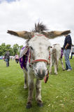 Donkey ride. At a funfair royalty free stock photography