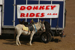 Donkey Rides 02 Royalty Free Stock Photo