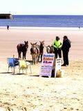 Donkey Rides, the beach, Scarborough. Donkey Rides on the beach at South Bay, Scarborough, North Yorkshire, England, UK Royalty Free Stock Photos