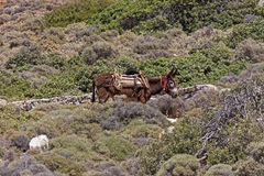 Donkey rides for tourists Stock Images