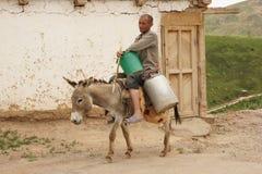 Donkey riding man Stock Images