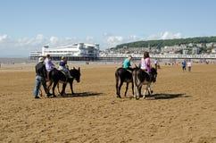 Donkey Riding at Weston-Super-Mare Stock Photo