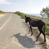Donkey on the road. Northern Cyprus. Daytime Stock Photos
