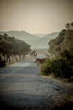 Donkey on the road. Donkey standing on the side of a remote road in the declining light (Cyprus Stock Photos