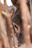 Donkey's eye. Close-up of donkey eye trough the lattice fence, Nubra Valley, Ladakh, India Royalty Free Stock Photo