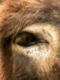 Donkey's eye Royalty Free Stock Photography