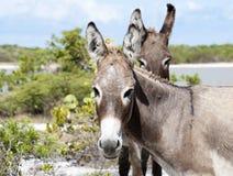 Free Donkey S Look Royalty Free Stock Photo - 41382955