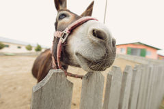 Donkey's Muzzle Royalty Free Stock Photos