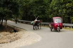 Donkey's in the road Royalty Free Stock Images