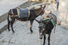 Donkey& x27; s-taxi i Lindos, Grekland Royaltyfri Bild