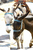 Donkey's taxi in Lindos, Greece Stock Photography