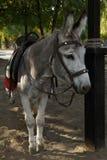 Donkey. Stock Images