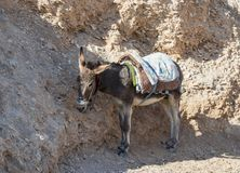 A donkey with a saddle is standing in the shade and resting and waiting for tourists on the viewing platform near Mitzpe Yeriho in. Israel royalty free stock photos
