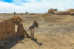Donkey in Sahara Desert, Morocco, Stock Photos
