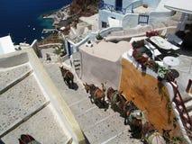 Donkey in Santorini Stock Images