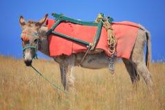 Donkey on Santorini island Royalty Free Stock Photo