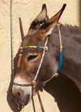 Donkey in Santorini Stock Photo
