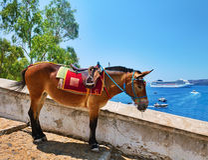 Donkey on Santorini Stock Photography